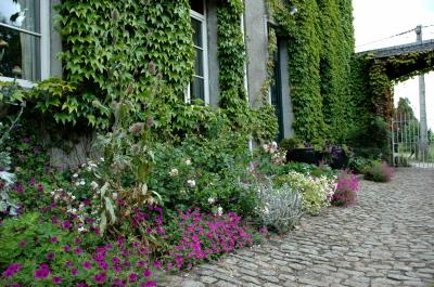 Plante grimpante mur persistant