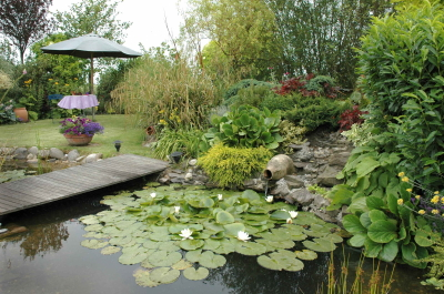 D co plantes bassin de lagunage perpignan 38 perpignan barcelone aeroport perpignan - Bassin plantes oxygenantes besancon ...