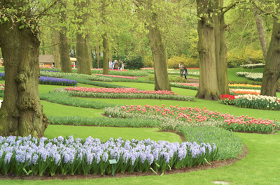 Au jardin keukenhof le jardin des tulipes for Le jardin keukenhof