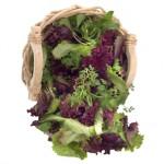 Salades à couper
