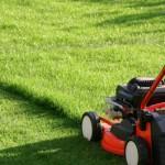 Que faire des tontes de pelouse ?