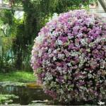 Flori Mundi, des orchidées au Jardin botanique
