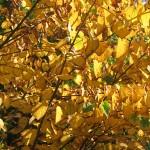 Planter un automne coloré