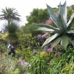 L'île botanique