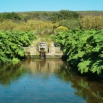 Un jardin tropical en Normandie